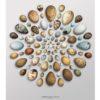 circular_eggs_main